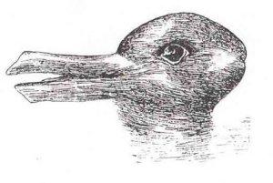 optical16-canard-lapin
