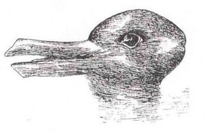 optical16-canard-lapin