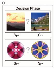 Phase C